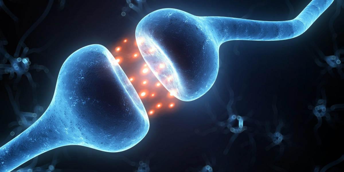 Magnesium hilft beim Lernen und der allgemeinen Gehirnfunktion - zur Veranschaulichung eine Gehirnsynapse
