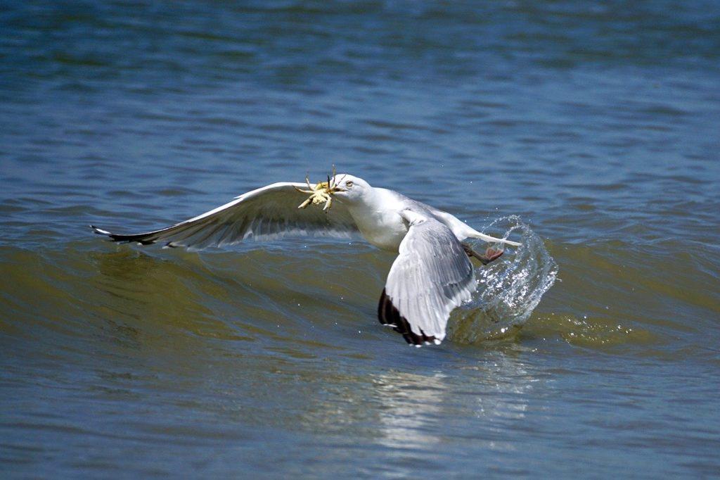 Vogel fängt Krabben & Meeresfrüchte