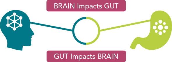 Probiotika Depressionen und Angstzustände -Diagram: Wie das Gehirn den Darm beeinflusst
