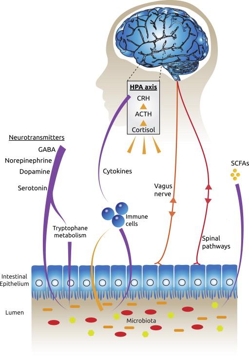 Probiotika Depressionen und Angstzustände - Diagram: Probiotika Depression Angst