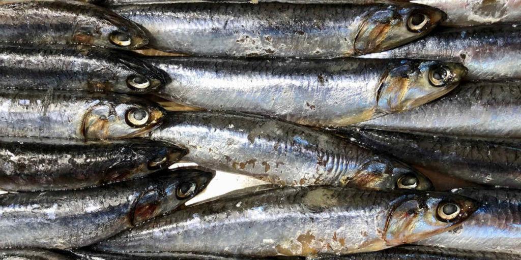 Der Einbau von Fischöl in die Ernährung kann dabei helfen, Übergewicht zu reduzieren